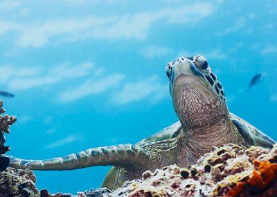 snorkeling1
